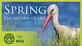Spring - The Return of Life - The Secrets of Nature