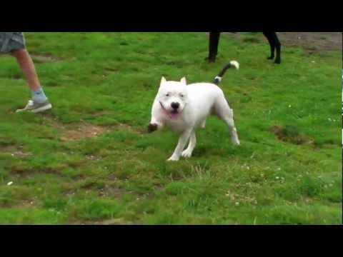 Funniest Dog Walk Ever!