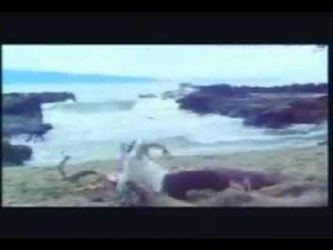 media mesum di pantai kerudung jilbab nafsu panaz membar