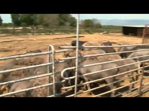 Odrekao se života u gradu radi farme magaraca