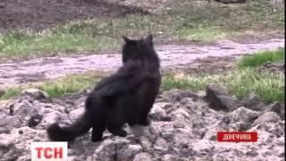 На Маріупольському напрямку бойовики посилюють обстріли українських позицій - (видео)