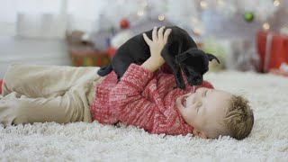 Tips for Keeping Your Pets Safe During the Holidays