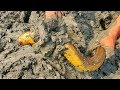 Eel Fish Catching ! Eel Fish are Hidden Under The Muddy