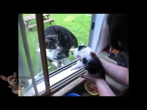 Funny Cats Meeting Cute dog For The First Time Compilation 2014 [NEW]