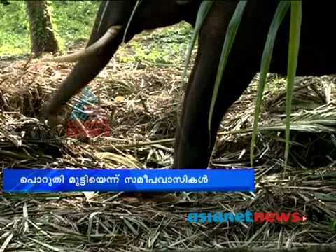 Trivandrum News:Cruelty aganist elephant: Chuttuvattom 20th May 2013 ചുറ്റുവട്ടം