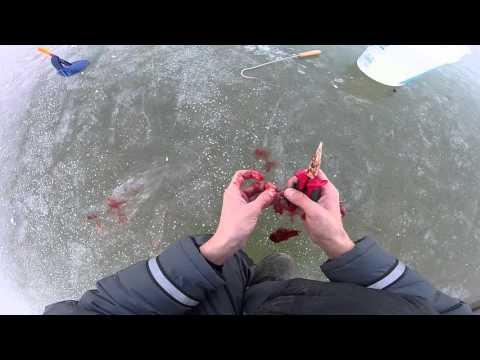 ловля щуки в марте на жерлицы видео 2016