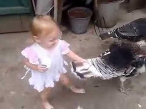 видео приколы дети и животные: