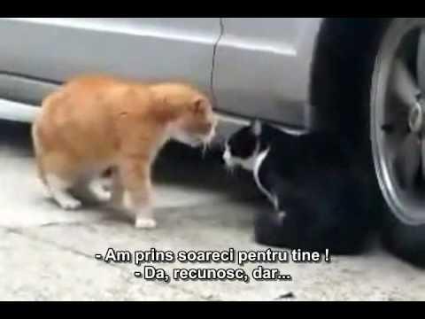 faze tari cu animale  YouTube