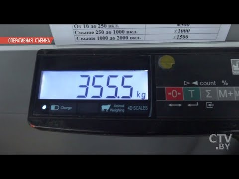 355,5 кг гашиша | На границе с Литвой задержали крупнейшую партию наркотиков на 9 млн. долларов