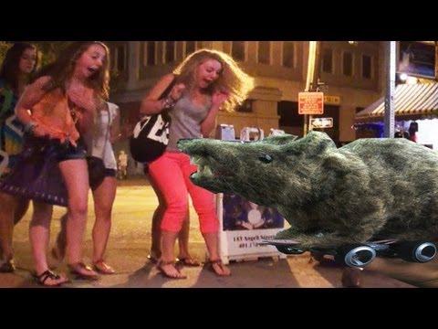 Zdalnie sterowany szczur