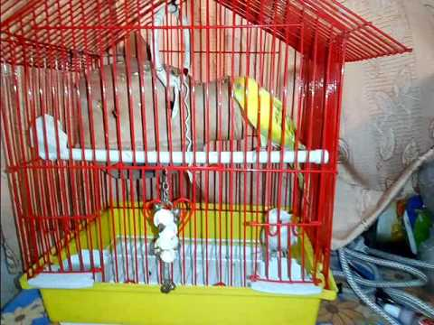 Bujri birds bacis  information