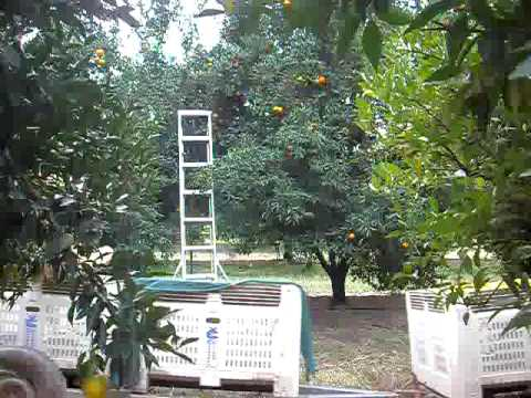 Naked Citrus Pickers driving to work! Part 1