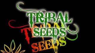 Watch Tribal Seeds Vampire video
