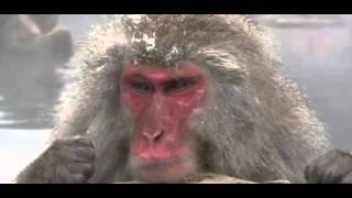 Amusing Snow Monkeys Full Documentary
