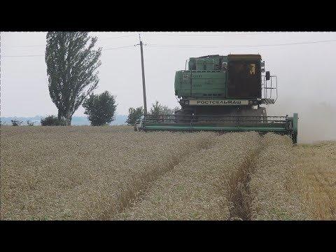 Уборка 2018.  Канадская трансгенная пшеница Толедо,  70ц/га