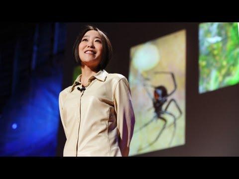 Cheryl Hayashi: The magnificence of spider silk