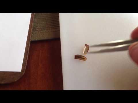 Viktor Grebennikov #1 - Testing Scarab (June Bug) Wing Covers
