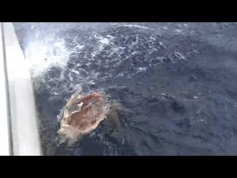 Gandrīz izvilka lielo zivi