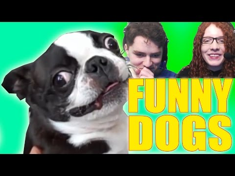 TRY NOT TO LAUGH - Funny Dogs Compilation Challenge