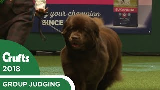Working Group Judging   Crufts 2018