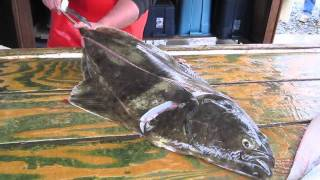 How To Fillet A Halibut.m4v