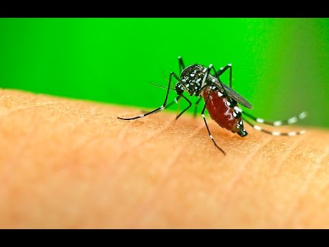 1st Malaria Vaccine Poised for Approval