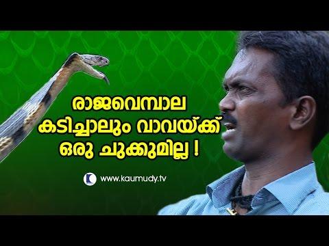 What if King Cobra Attacks & Bites Vava Suresh ? | Kaumudy TV