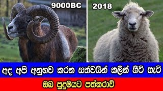 How farm animal change over the time