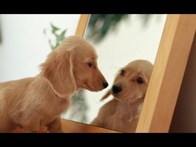 Animals vs Mirrors Compilation 2013 [HD]