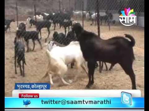 Kolhapur based Sunil Desai ssuccess story of goat farming