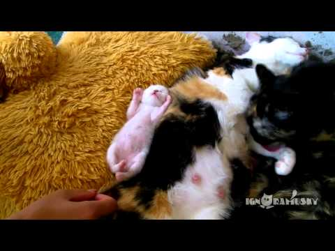 バンザーーーイ!!ママの横で眠る子猫の格好が超絶カワイイ!!