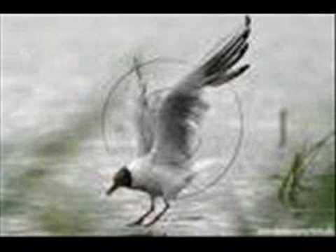 Swinger life stle