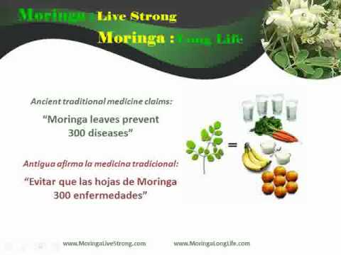 Diet Supplements With  Moringa Leaf Powder