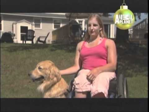 GOLDEN RETRIEVER - ABC CANINO - 101 DOGS - ESPAÑOL