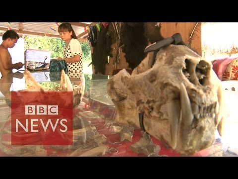 Undercover In Myanmar's Sin City Where Anything Goes - Bbc News video