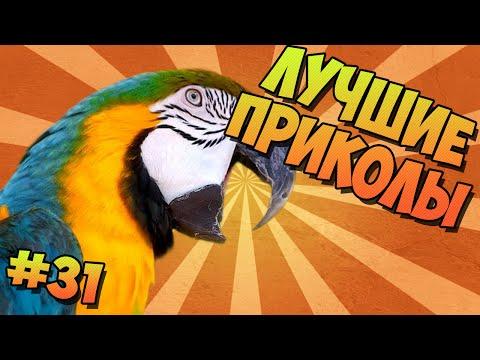 ЛУЧШИЕ ПРИКОЛЫ #31 ПЕНИЕ ПОПУГАЕВ