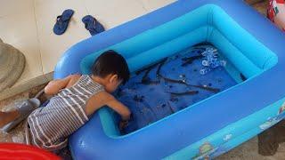 Trò Chơi Thả Cá Vào Bể Bơi| Kids Toy Media