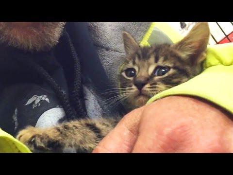 配管に閉じ込められ33時間後に救出された子猫