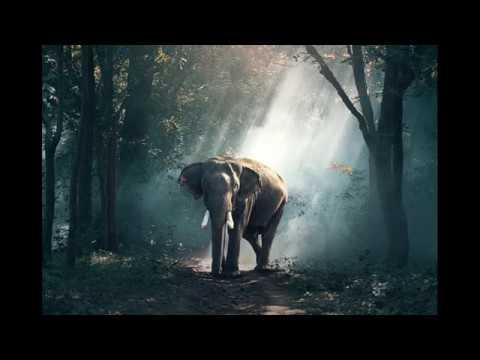 Cellyrical:  Kinderlieder 3 und 4 - 'Elefant im Tropenland' / 'Sturm' - G. Marie/ A. Diabelli