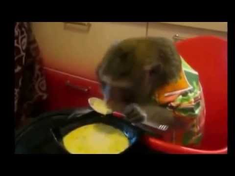 VIDEOS QUE DAN RISA ANIMALES GRACIOSOS