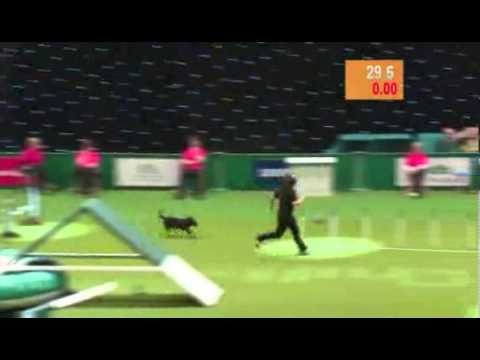 Dog Agility Competition Fail