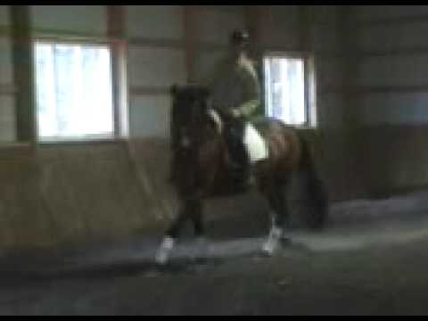 Horse for Sale Imported Rhinelander Mare Video