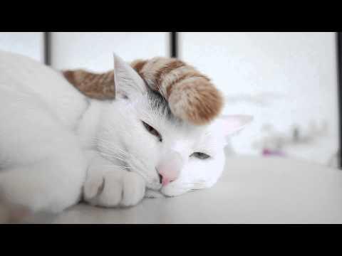 猫ちゃんの頭の上にちょん...