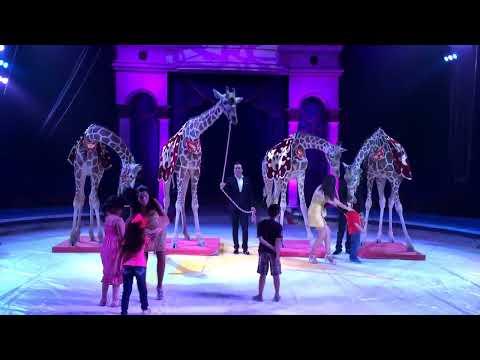 Jirafas Inteligentes del Circo Chino de Pekín MR