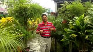 Bangla song tui buji ar dhukho debar manush