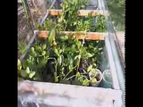 Vivero como hacer creser las plantas y dar frutas grandes for Viveros de plantas en buin