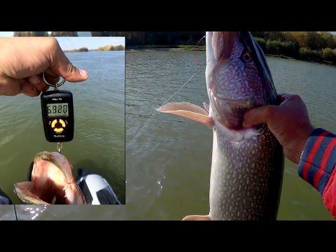 видео рыбалка спиннингом судака на иртыше