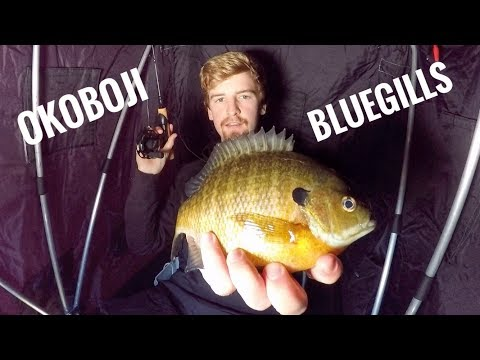 Shallow Water Sight Fishing!! MP3