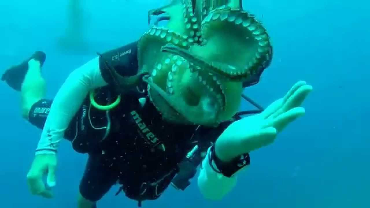 Octopus Attack Scuba Diver Giant Octopus Attacks Diver