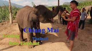 Karen Video 2018 ( Feeding Baby Elephant - Chiang Mai = Thailand )